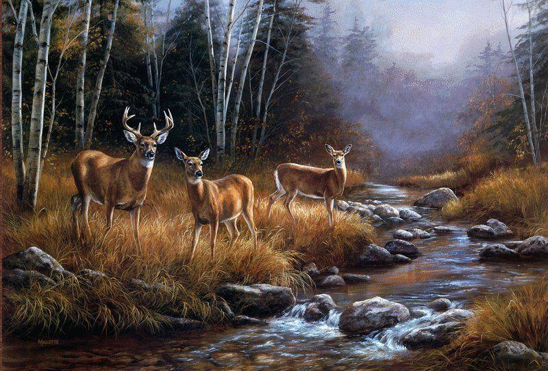 Whitetail deer paintings wallpaper