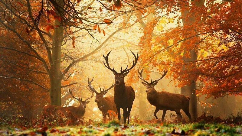 autumn-deer.jpg